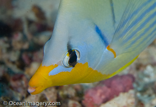 I love the colors in this Butterfly Fish..